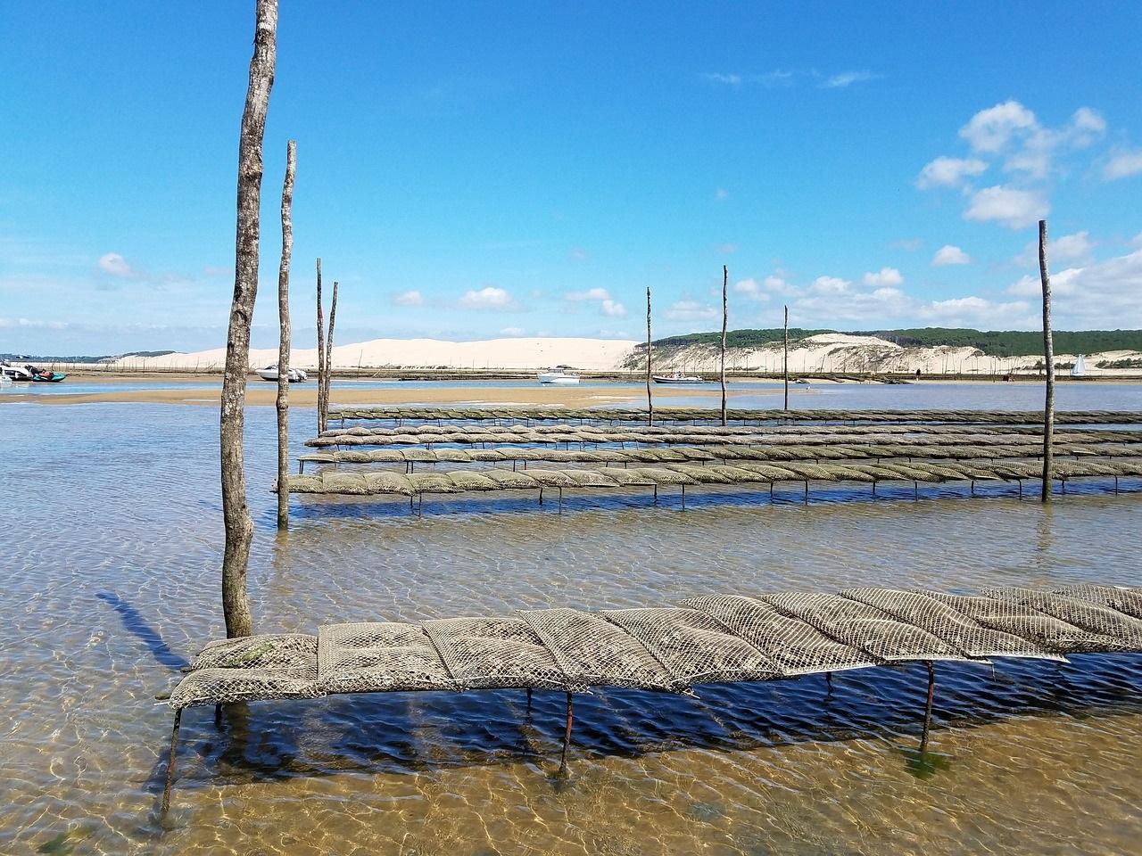 Où manger des huîtres sur le Bassin d'Arcachon ?